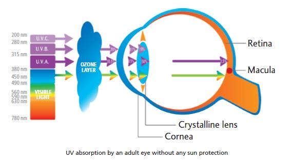 Uv Rays Protection